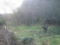 第4畑開墾中