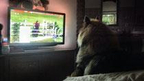Kwispel guckt gerne fernsehen...