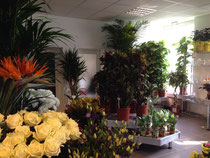 Blumen Watkins Jungle