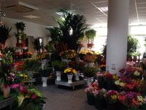Blumen Watkins Auswahl