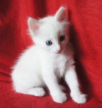 Blue-eyed white girl , 5 weeks
