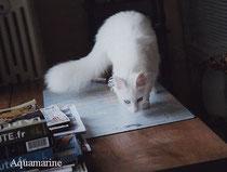 Lada Kedi Aquamarine, fotograf Anne Marie Bernel