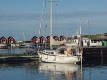Vesterö-havn: Vännina