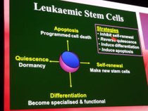 ASH 2011 cellules souches LMC leucemie guerison cancer traitement espoir lmc leucémie myéloïde chronique leucemie aigue sang moelle greffe