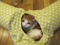 ネコちゃんトンネル