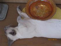 水鉢で涼むサイミー君
