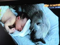 赤ちゃんに添い寝するネコ