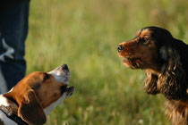 hundliche Kommunikation Hundekommunikation verstehen