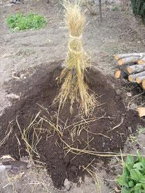 昨年、種馬鈴薯を保存しておいた様子