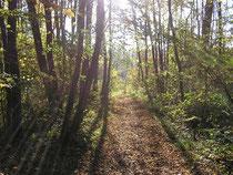 Goldener Herbst in der Au.