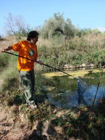 Fent el seguiment a la bassa