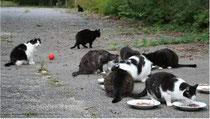 Raunheimer Wildkatzen in Not