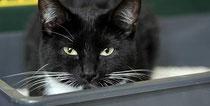 Millionen Katzen in Deutschland haben kein Zuhause. (Foto: imago)