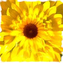 向日葵の印象を多重露光で表現した作品