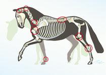 """""""Problemzonen"""" des Pferdes"""