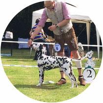 2.Platz (V2) Puppy Klasse