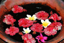 Hibiscus et frangipaniers