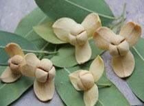 Fleur de romdoul