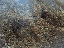 堆肥 発酵で湯気
