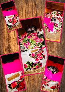 Muggelbüddel MädchenTraum Blumen pink, sofort verfügbar Kontakt per Mail bitte