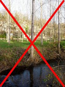 Eviter la plantation de peuplier en bordure de rivière