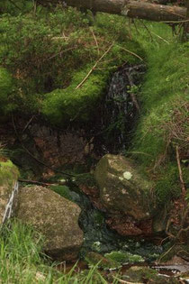 Wasser wohin man blickt   Bild:Joachim Eberhard
