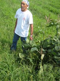 自然農法にとりくむ成田陽一さん