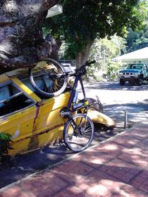 AIDA-Fahrrad stützt Baum, darunter der Schulbus