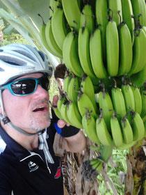 """Ich """"unter"""" Bananen auf St. Lucia"""