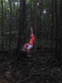 Tarzan Z. im Regenwals von Dominica