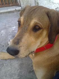 Hermes der Wanderhund