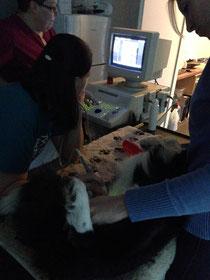 Shiva beim Ultraschall