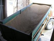 Livraison du blé après les moissons