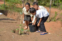 木を育てるために水やりは欠かせない作業です