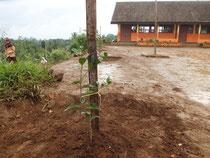 早く大きくなりますようにとの願いを込めて校内に植えられた木々。