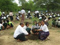 地域の人も集まって、みんなで植林を しました。