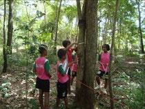森の調査活動