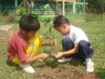 正しい植樹方法を学びます