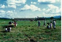 1992年の植林の様子。学校の敷地は広いものの、木々は少ない。