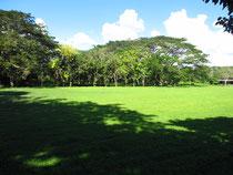 子どもたちお気に入りの森。ゆっくり休める木陰もできました!