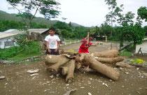 台風で根こそぎ倒れた木