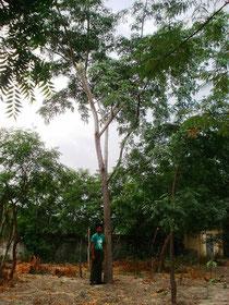 当時植林した木とチョースエリン君(16歳)