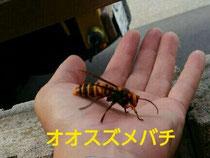 ハチ駆除 お任せ下さい