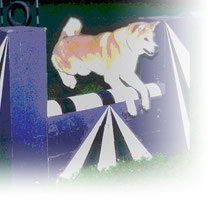 akita Hundesport Agility