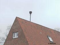 Borgwedelfeld