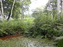 クリスチャニア 庭の小池