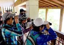 新春探鳥会で、群れを作るカルガモなど野鳥を観察する参加者=18日午前、バンナ公園の石垣ダム