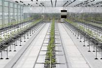 トマト生産工場が稼働した=9日、市内新川