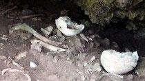 野底遺跡では、約200~300年前の人骨が出土した=12日午前、同遺跡