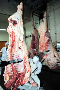 競り落とされた枝肉を解体する購買者=7日午前、八重山食肉センター